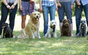 dogs-Depositphotos_78452896_original